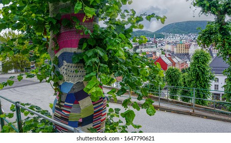 The trunk of the green tree is protected by a manually knitted mesh. Caring for the environment. Yellow, green, red threads are used for weaving. Overall plan.
