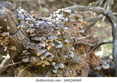 Trunk with mushrooms in the forest