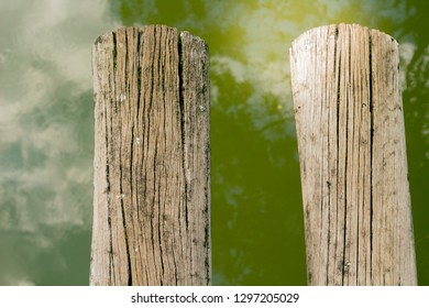 trunk nature forest abstrat