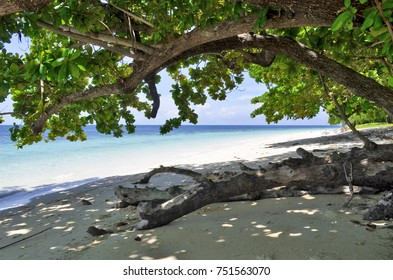 Trunk on a beach of Koh Kradan in the Andaman Sea