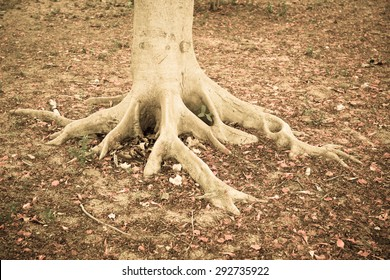 Trunk and root on fallen red petal ground in vintage tone