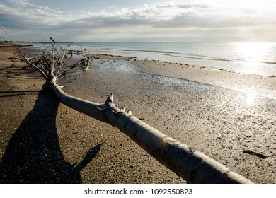 trunk skeleton on the beach at sunrise