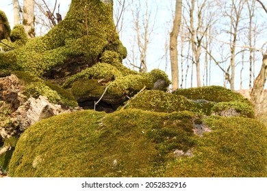 Trunk and stone covered with a green moss. High quality photo