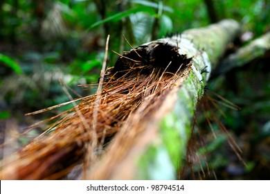 Trunk of a tree in Amazon region