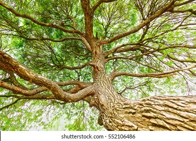 The trunk of the tree with green summer foliage