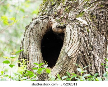 trunk of tree with hole