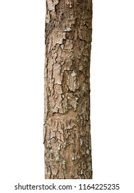 Trunk of a tree Isolated On White Background