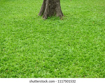 trunk of tree on green grass