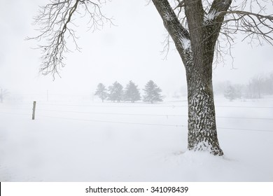 Trunk of Walnut Tree and Snowy Field in Winter