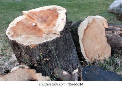Trunks of cut off trees