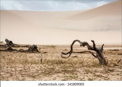 Trunks at Desert