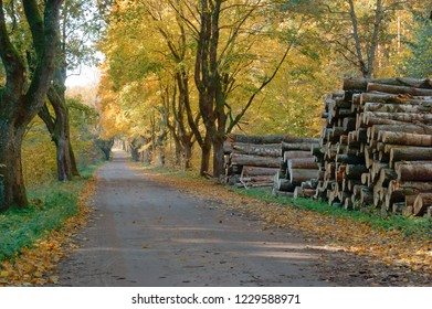 trunks of felled trees, felled trees and autumn forest, deforestation