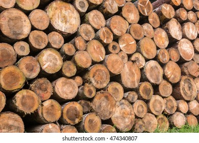 trunks of fir trees cut down to the sawmill