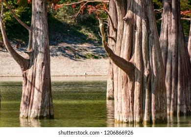 Cypresses Images, Stock Photos & Vectors | Shutterstock