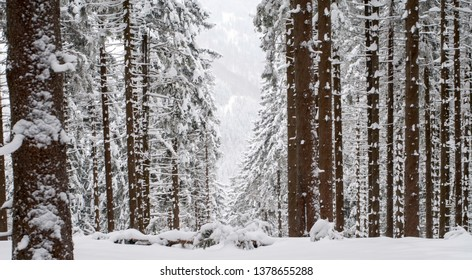 Trunks of trees in winter forest