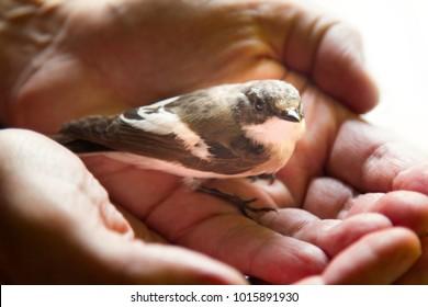 Birds Lover Images, Stock Photos & Vectors | Shutterstock
