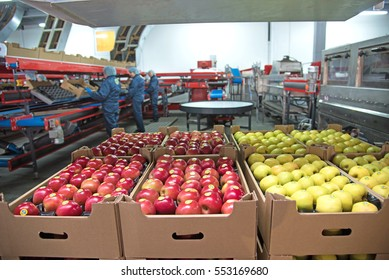 """Trybuhivtsi, Ukraine  December 14, 2016: Apples in boxes at factory in agroindustrial company """"Gadz"""" in Ternopil region."""