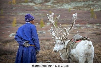 tsaatan man with his rein deer in the nature of northern Mongolia