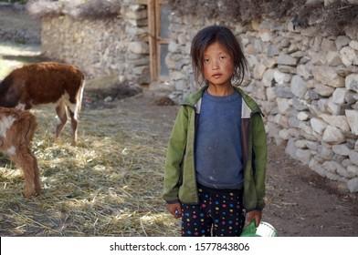 Tsarang, Upper Mustang / Nepal - August 23, 2014: A little girl of Tibetan nationality stands next to a calf near a white brick fence.