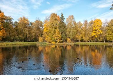TSARSKOYE SELO, SAINT-PETERSBURG, RUSSIA – OCTOBER 8, 2018: Ducks swimming in Ozerki Ponds in The Alexander Park. The Tsarsskoye Selo is The State Museum Preserve