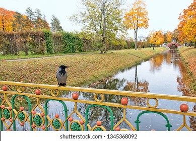 TSARSKOYE SELO, SAINT-PETERSBURG, RUSSIA – OCTOBER 8, 2018: Bird on the one of The Small Chinese Bridges in Alexander Park. On the background is  The Krestovy (Cross) Bridge