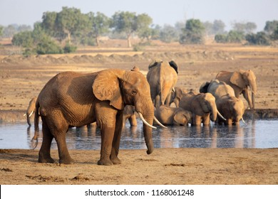 TSAVO EAST NATIONAL PARK, KENYA, AFRICA - FEBRUARY 25th 2018: A herd of African elephants at a watering hole on the dry savannah in afternoon sun