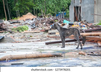 Tsunami in Sunda Strait, Indonesia - Belongings of tsunami victims left behind in the damaged houses  after being hit by tsunami on December 26, 2018 in Banten province, Indonesia.