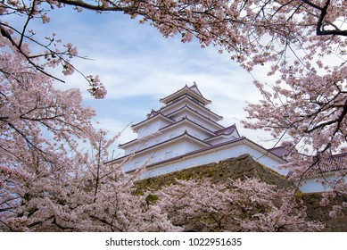 Tsuruga Castle or Aizuwakamatsu Castle surrounded by hundreds of sakura trees, Otemachi, Aizuwakamatsu, Fukushima Prefecture, Japan.