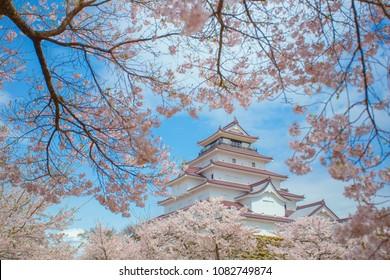 Tsuruga-jo Castle With Cherry Blossom(Sakura), Fukushima, Japan