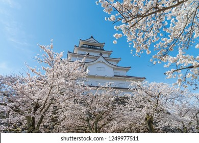 Tsuruga-jo castle with full blooming cherry blossom at Aizu-wakamatsu, Japan.