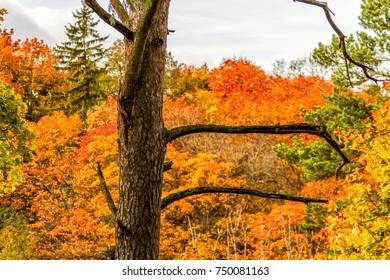Ttree in the autumn park