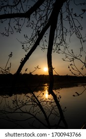 Ttree branches with water and sun in background at sunset