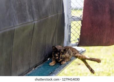 Tuaran, Sabah, Malaysia - November 28 2018: A stray cat napping in the starting gate of the Royal Sabah Turf Club (malay: Kelab Lumba Kuda Diraja Sabah) in Sabah