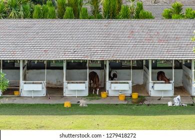 Tuaran, Sabah, Malaysia - November 28 2018: Stables of the Royal Sabah Turf Club (malay: Kelab Lumba Kuda Diraja Sabah) in Tuaran