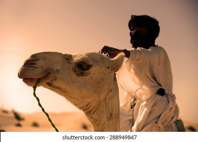 Tuareg with his camel