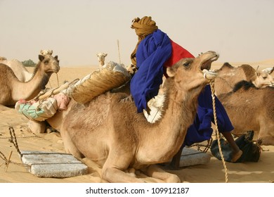 A tuareg nomad unloads  salt from a camel caravan during a stop at an oasis  in the Sahara Desert of Mali, Africa