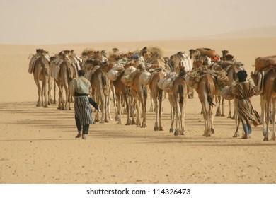 Tuareg nomads of the Berber tribe tend to a camel caravan hauling salt in the sahara Desert of Mali near  Timbuktu