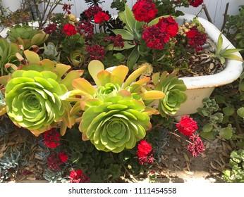 Tub of plants in sun