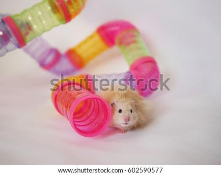 Hampster sex tube