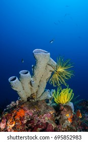 Tube sponge (Porifera) with colorful feather stars on a coral reef