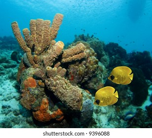 Tube sponges and yellow Masked Butterfly fish in the Caribbean Sea
