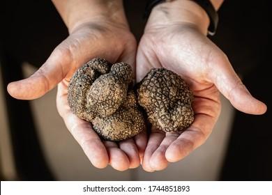 Tuber Aestivum Black truffles, Umbria, Italy