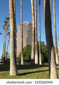 Tucson, Arizona/USA - October 15, 2019: High-rise building behind palm trees