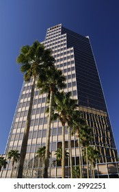 Tucson Downtown Building and Palm Trees