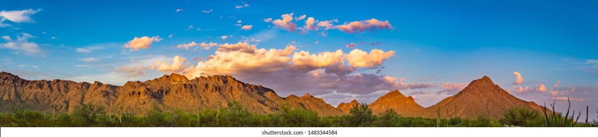 Tucson Mountain Park with Saguaro Cactus Panorama
