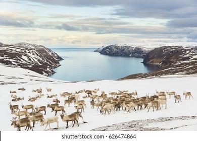 Tufjorden (Nordkapp)