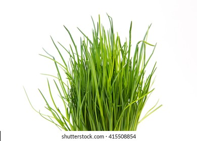 tuft chives