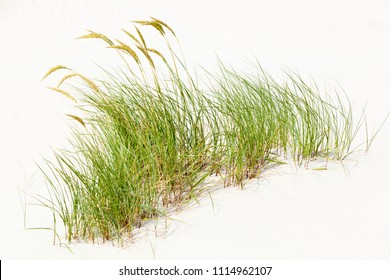 Ein Haufen Gras in den berühmten Sanddünen an der Nordsee in Norderney, Deutschland.