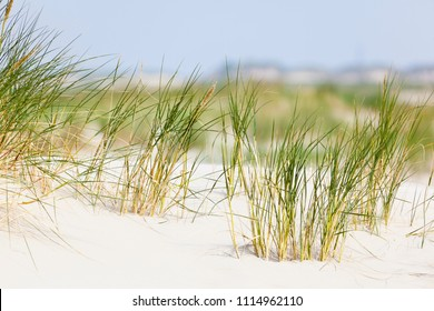 A tuft of grass in the famous sand dunes at the North Sea in Norderney, Germany.