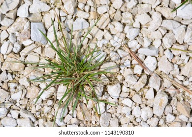 A tuft of grass grows in the middle of limestone
